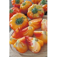 Tomato Grafted Plants - Pineapple (3) (Organic)
