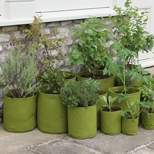 VIGOROOT POTS AND PLANTERS 10 litre, pack 3