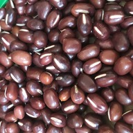 ADUKI BEANS for sprouting, 500g pack (organic)
