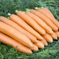 MAINCROP CARROTS SAVER PACKAGE SV009